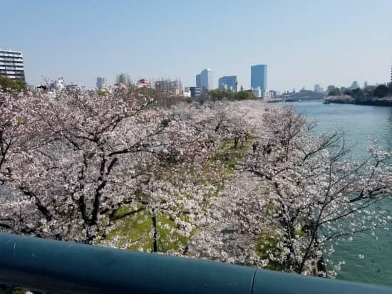 第69回文化から学ぶ韓国語~お花見09