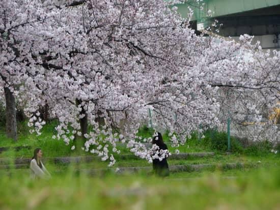 第72回文化から学ぶ韓国語ーお花見01